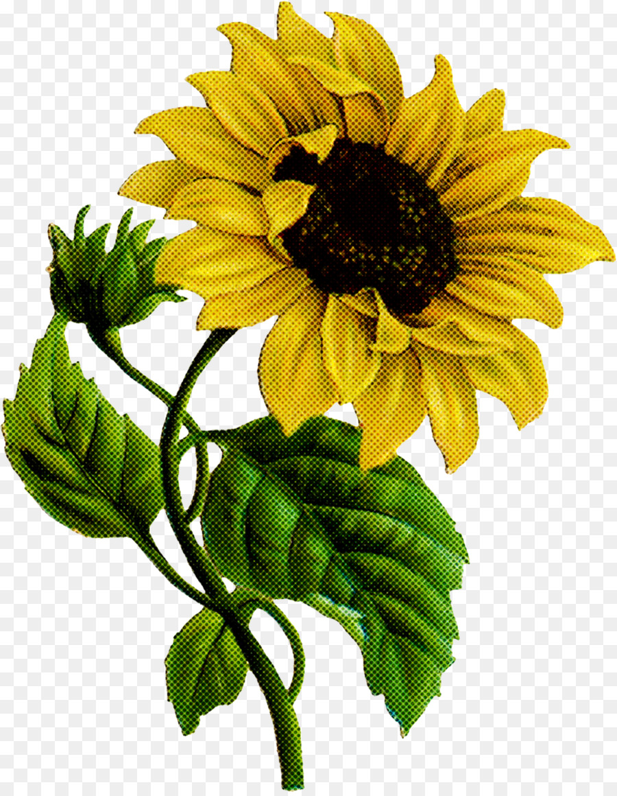Descarga gratuita de Flor, Girasol, Planta Imágen de Png