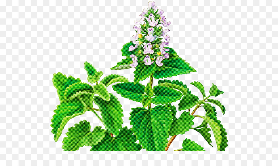 Descarga gratuita de Planta, Flor, Hoja Imágen de Png