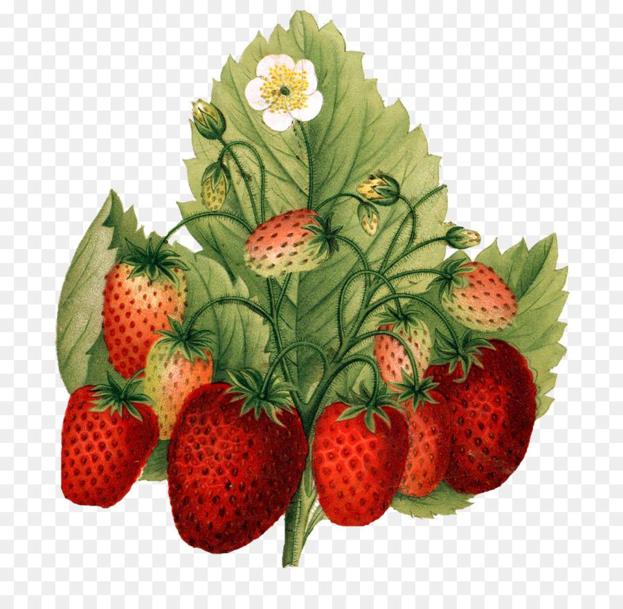 Descarga gratuita de Fresa, Fresas, Alimentos Naturales Imágen de Png