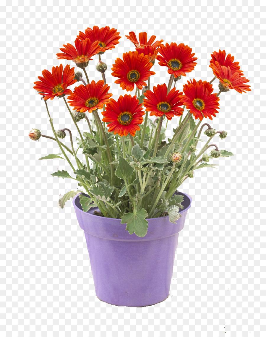 Descarga gratuita de Flor, Maceta, Planta Imágen de Png