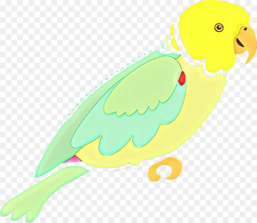 Descarga gratuita de Periquito, Parakeet, Aves Imágen de Png