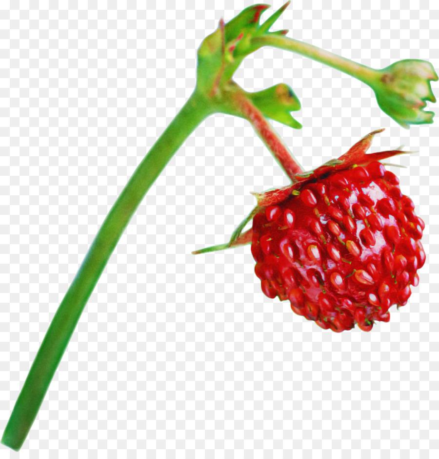 Descarga gratuita de Planta, Berry, Alimentos Naturales Imágen de Png