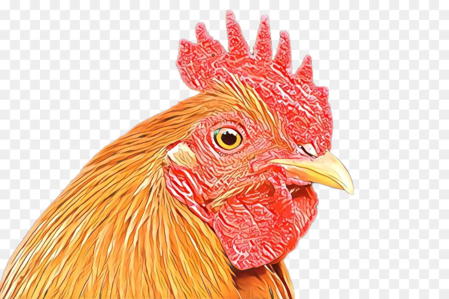 Descarga gratuita de Pollo, Gallo, Aves Imágen de Png