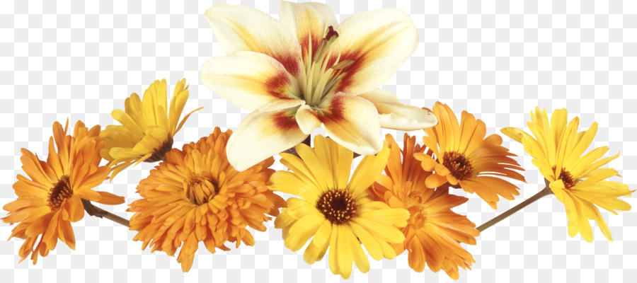 Descarga gratuita de Flor, Amarillo, Pétalo Imágen de Png