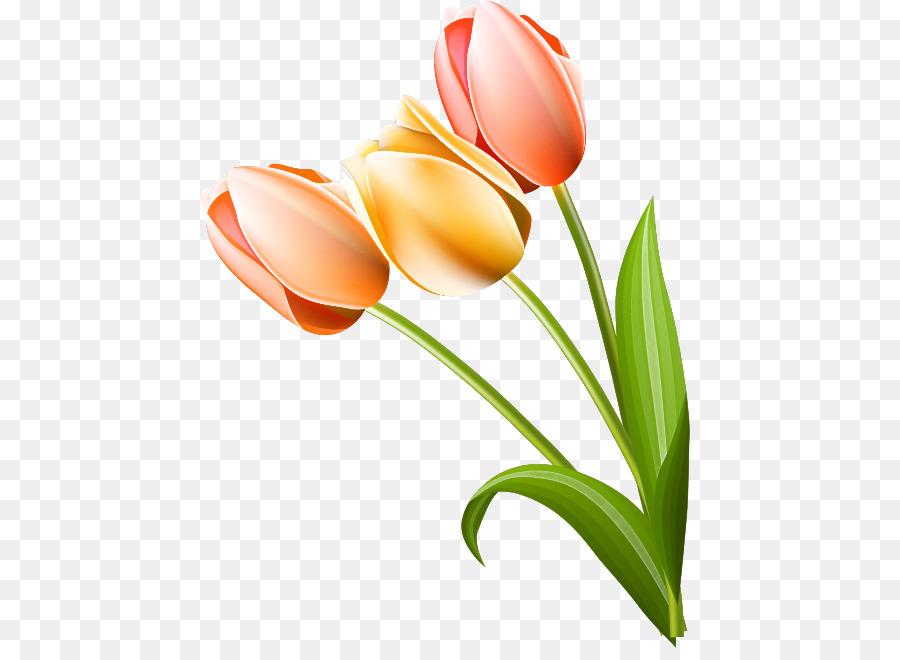Descarga gratuita de Tulip, Flor, Planta Imágen de Png