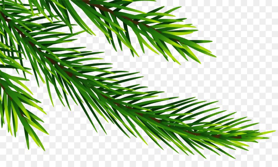 Descarga gratuita de Rama, árbol, Jack Pine Imágen de Png