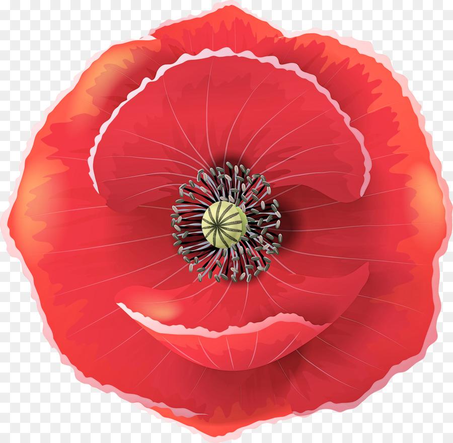 Descarga gratuita de Flor, Rojo, Pétalo Imágen de Png