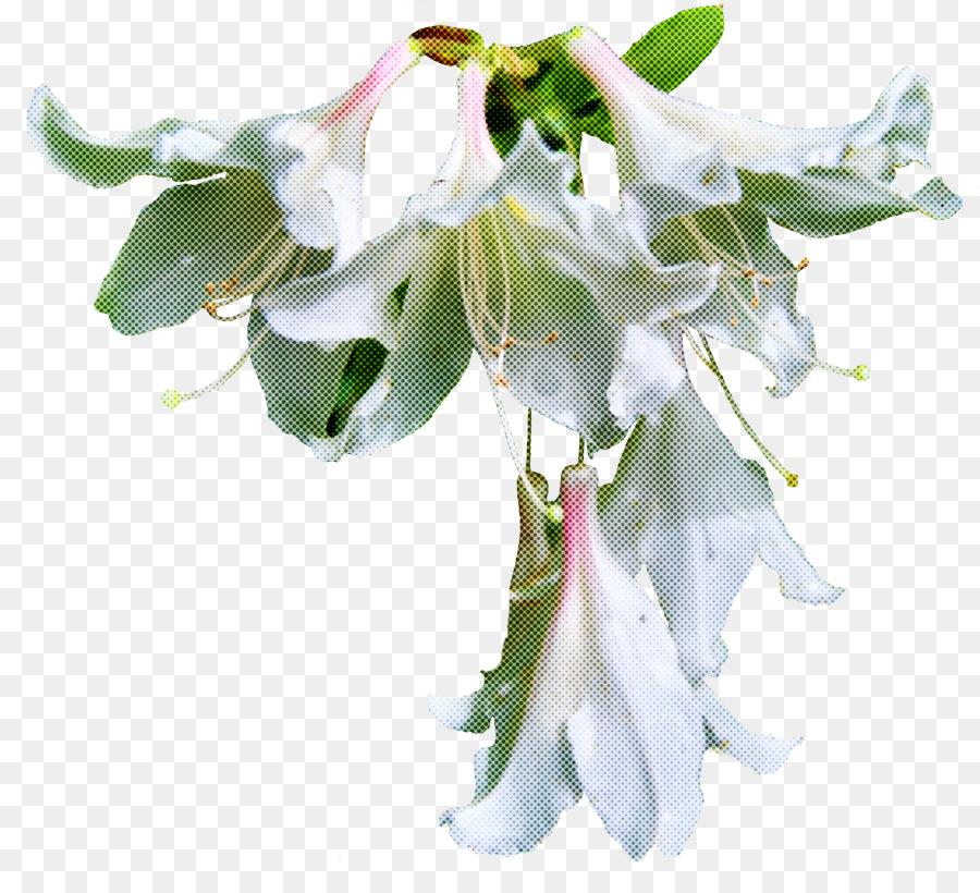 Descarga gratuita de Flor, Blanco, Planta Imágen de Png