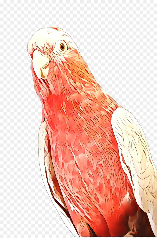 Descarga gratuita de Aves, Pico, Guacamayo Imágen de Png