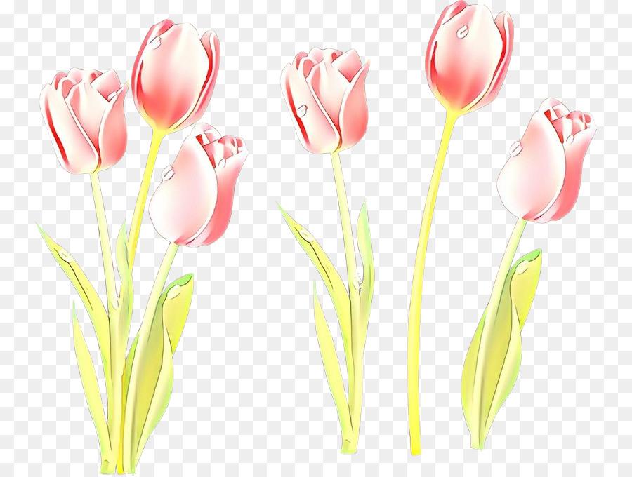 Descarga gratuita de Tulip, Flor, Rosa Imágen de Png