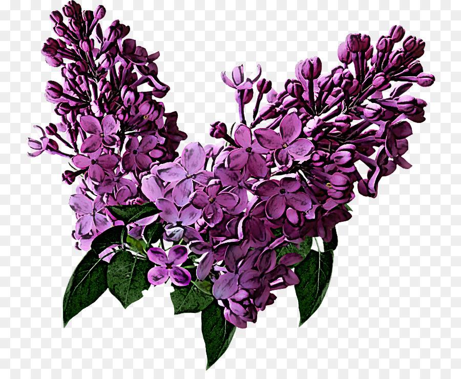 Descarga gratuita de Flor, Lila, Violeta Imágen de Png