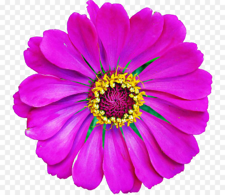 Descarga gratuita de Flor, Pétalo, Violeta Imágen de Png