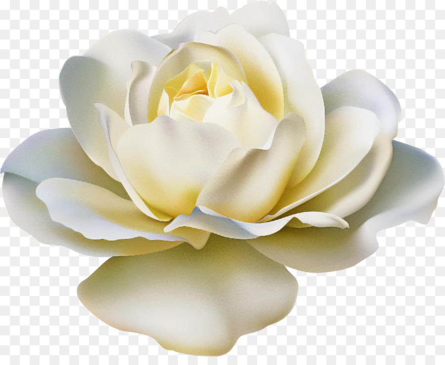 Descarga gratuita de Blanco, Pétalo, Flor Imágen de Png