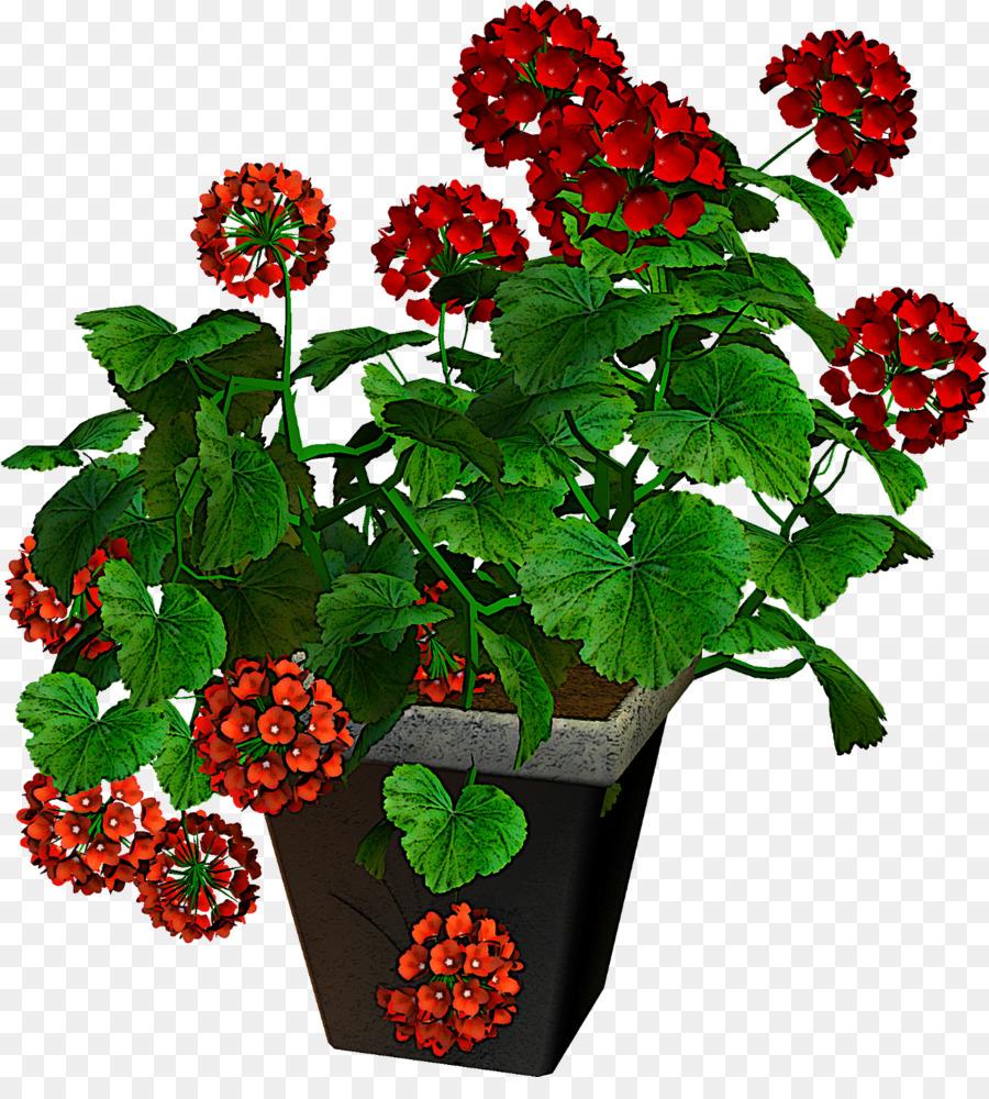 Descarga gratuita de Flor, Planta, Berry Imágen de Png