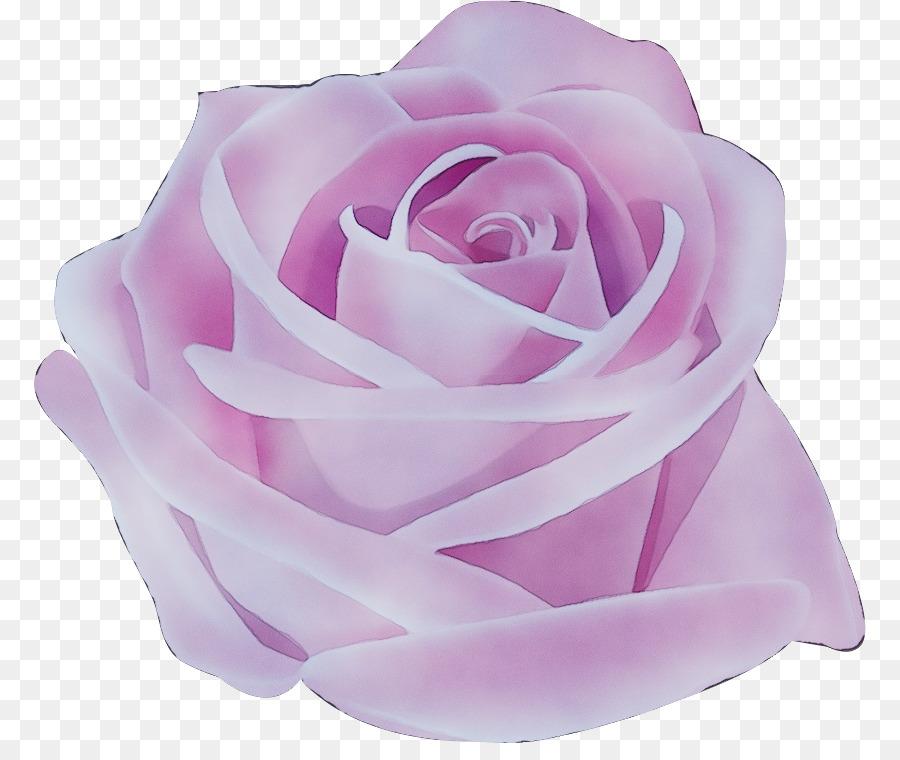 Descarga gratuita de Las Rosas De Jardín, Rosa, Blanco Imágen de Png