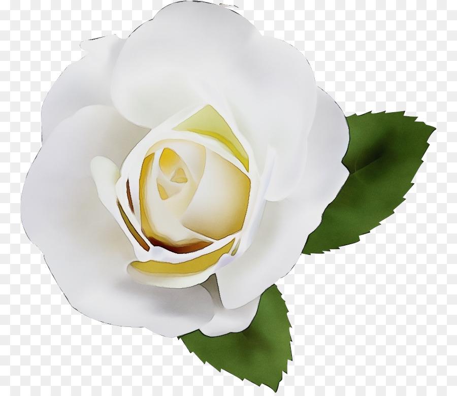 Descarga gratuita de Blanco, Flor, Rosa Imágen de Png