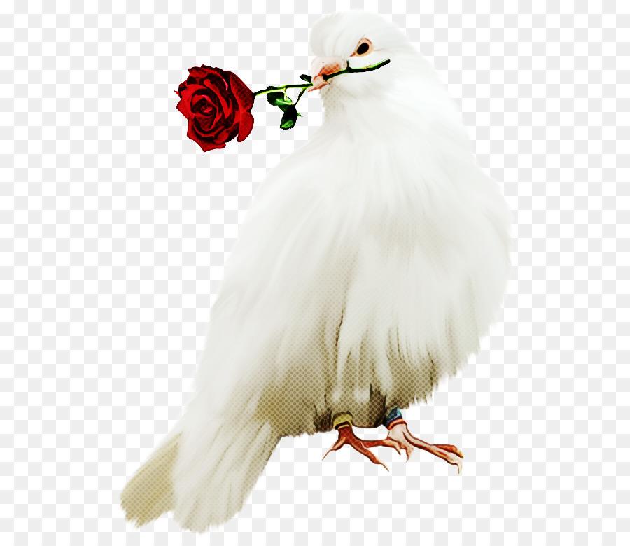 Descarga gratuita de Blanco, Aves, Pico Imágen de Png
