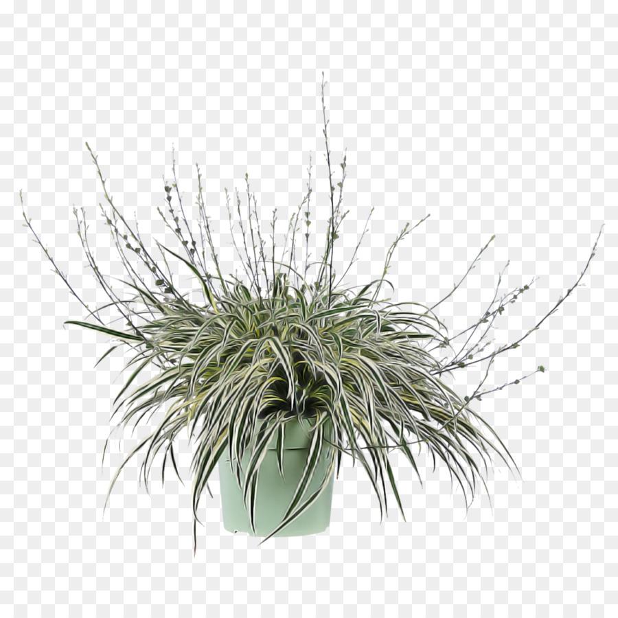 Descarga gratuita de La Hierba, Planta, Flor imágenes PNG