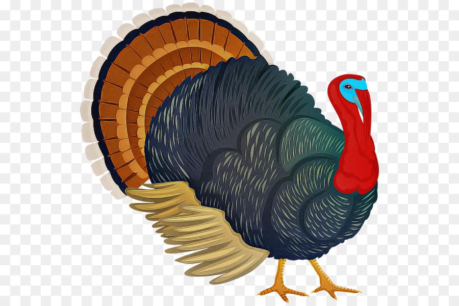 Descarga gratuita de Turquía, Wild Turkey, Aves Imágen de Png