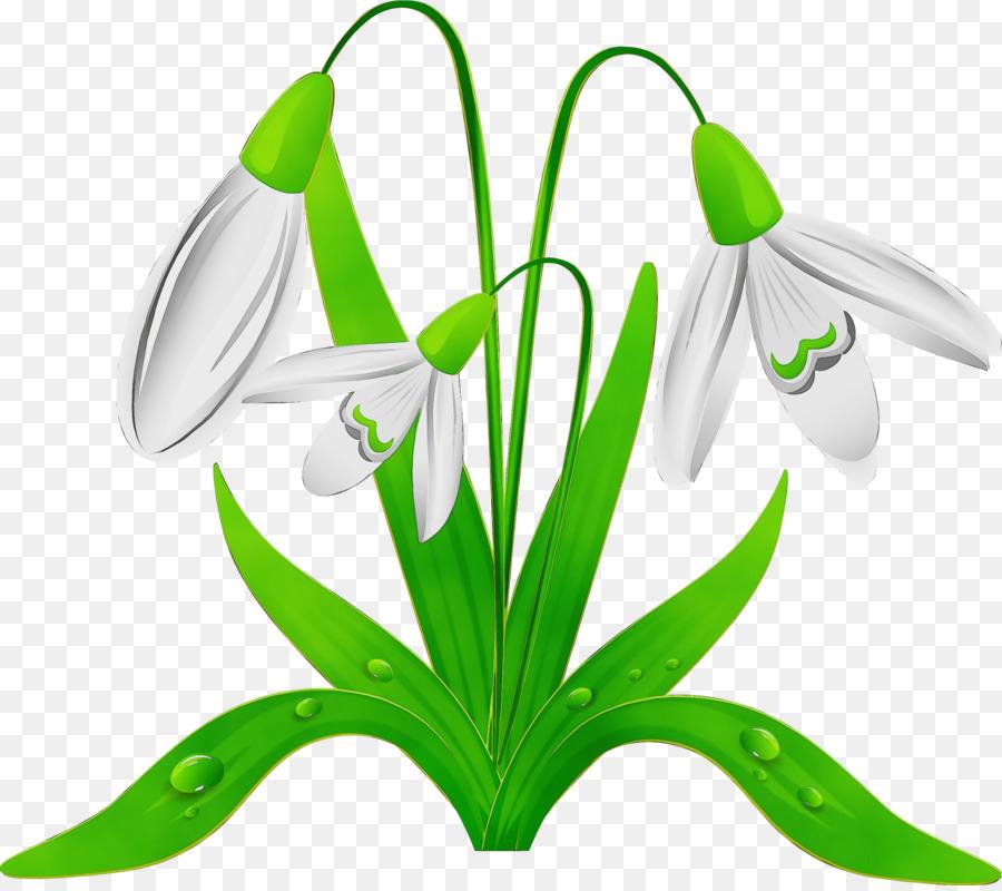 Descarga gratuita de Galanthus, Campanilla De Invierno, Flor imágenes PNG