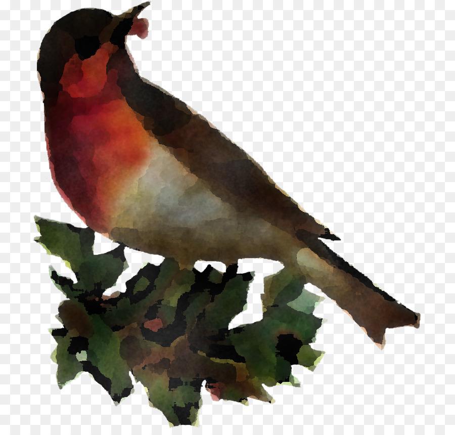 Descarga gratuita de Aves, Pico, Finch imágenes PNG