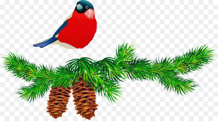 Descarga gratuita de árbol, Abeto, Jack Pine Imágen de Png