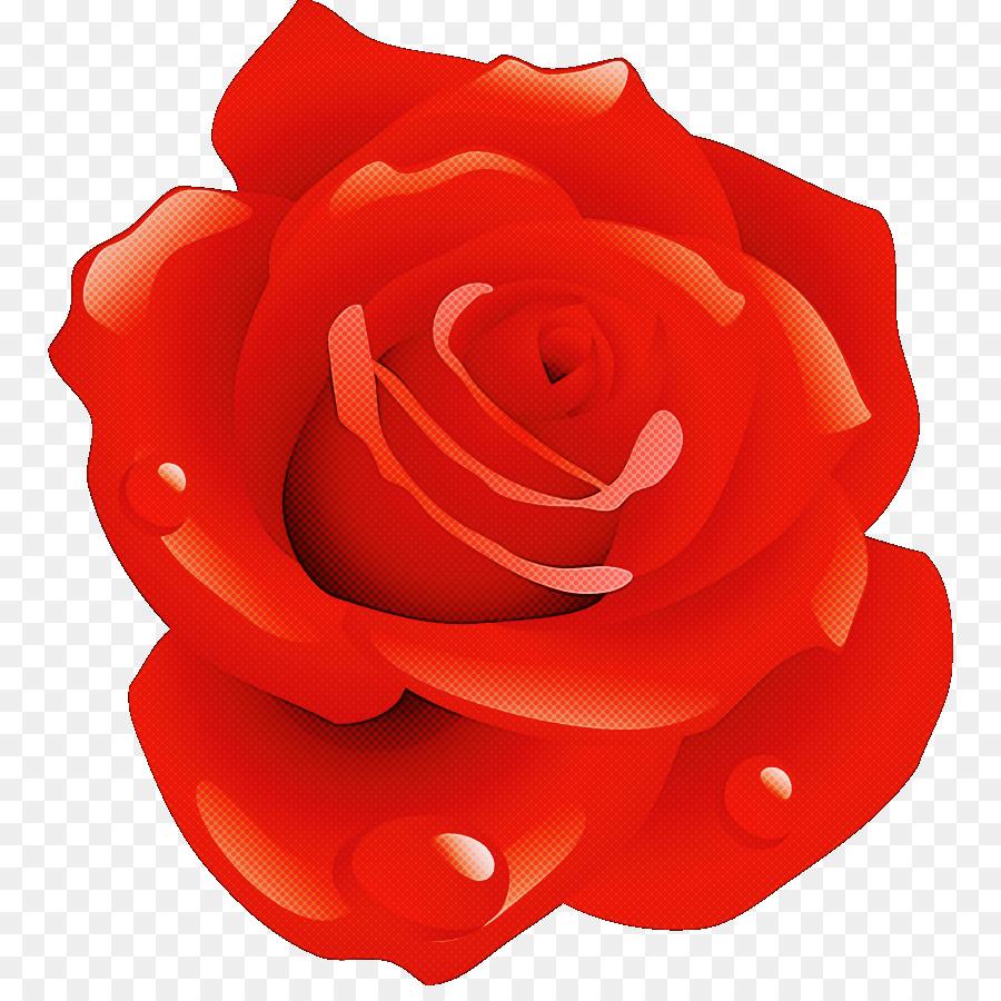 Descarga gratuita de Las Rosas De Jardín, Rojo, Rosa Imágen de Png