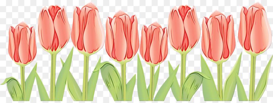 Descarga gratuita de Tulip, Flor, Pétalo Imágen de Png