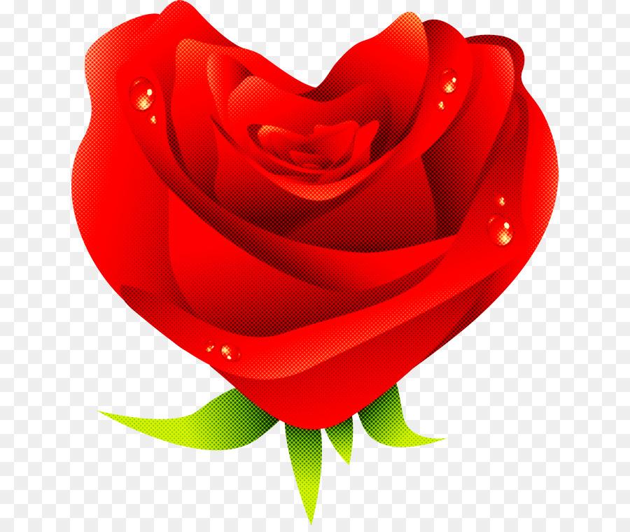 Descarga gratuita de Rojo, Las Rosas De Jardín, Rosa Imágen de Png
