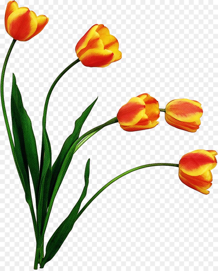 Descarga gratuita de Flor, Tulip, Las Flores Cortadas Imágen de Png