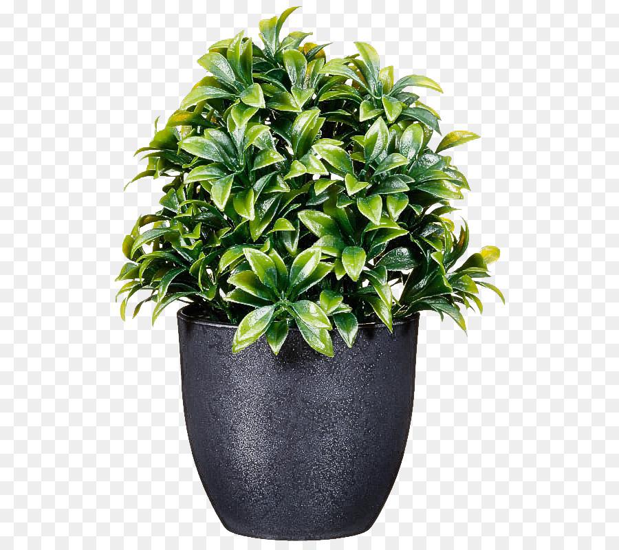 Descarga gratuita de Flor, Maceta, Planta imágenes PNG