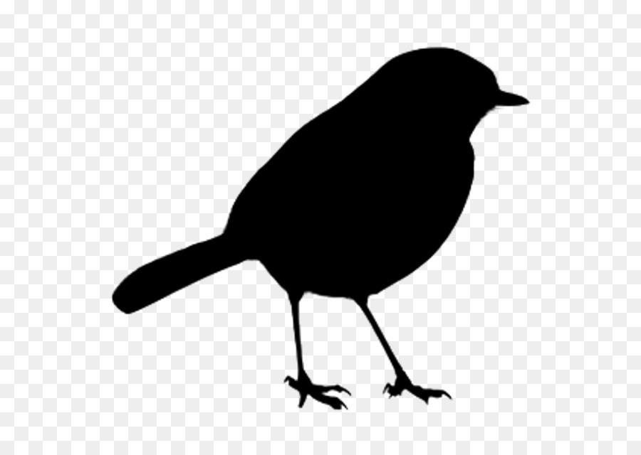 Descarga gratuita de Aves, Pico, Blackbird Imágen de Png