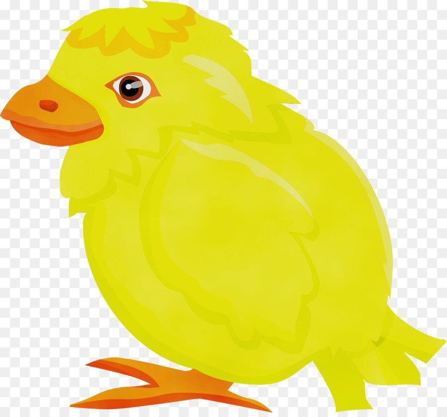 Descarga gratuita de Aves, Amarillo, Pico Imágen de Png
