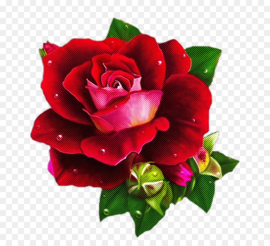 Descarga gratuita de Flor, Las Rosas De Jardín, Rojo imágenes PNG