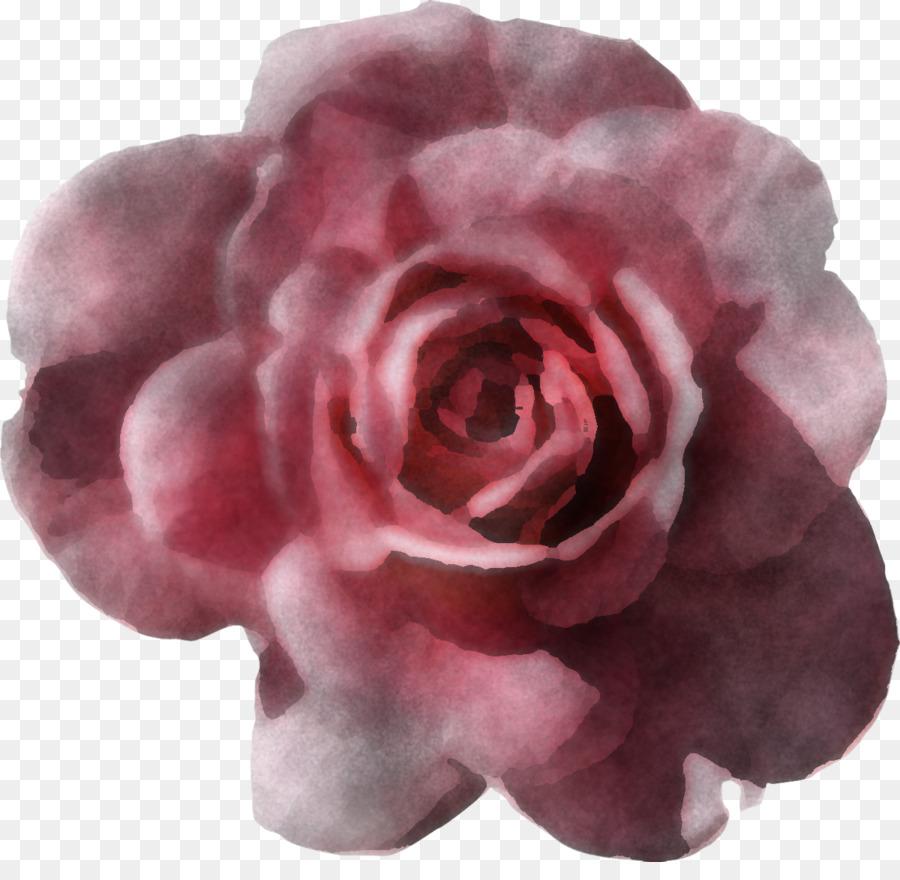 Descarga gratuita de Rosa, Flor, Las Rosas De Jardín imágenes PNG