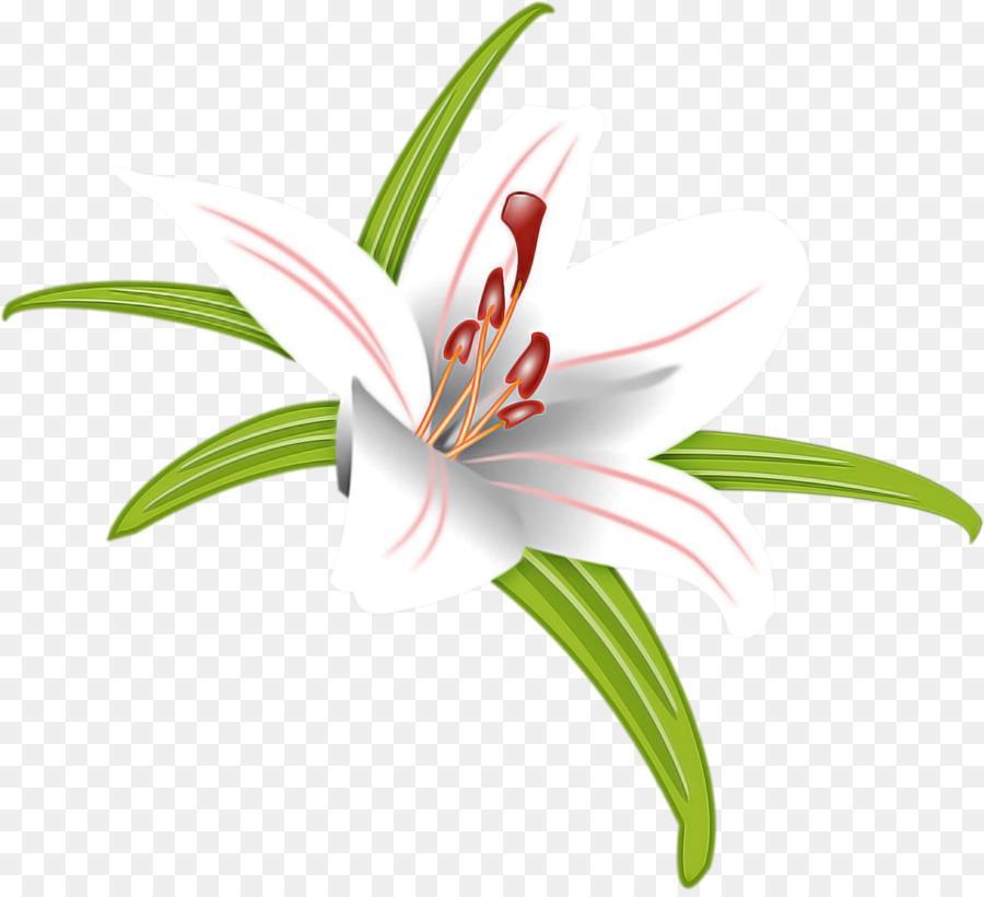Descarga gratuita de Flor, Lily, Planta Imágen de Png