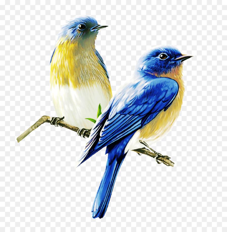 Descarga gratuita de Aves, Bluebird, Montaña Bluebird Imágen de Png