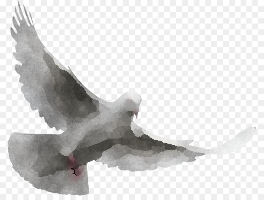 Descarga gratuita de Las Palomas Y Las Palomas, Aves, Ala Imágen de Png