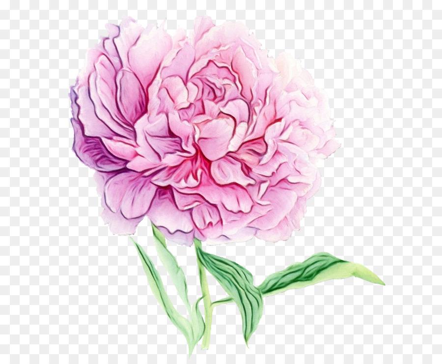 Descarga gratuita de Flor, Rosa, Común De La Peonía imágenes PNG
