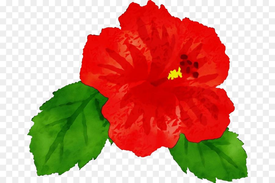 Descarga gratuita de Flor, Hibiscus Hawaiian, Pétalo Imágen de Png