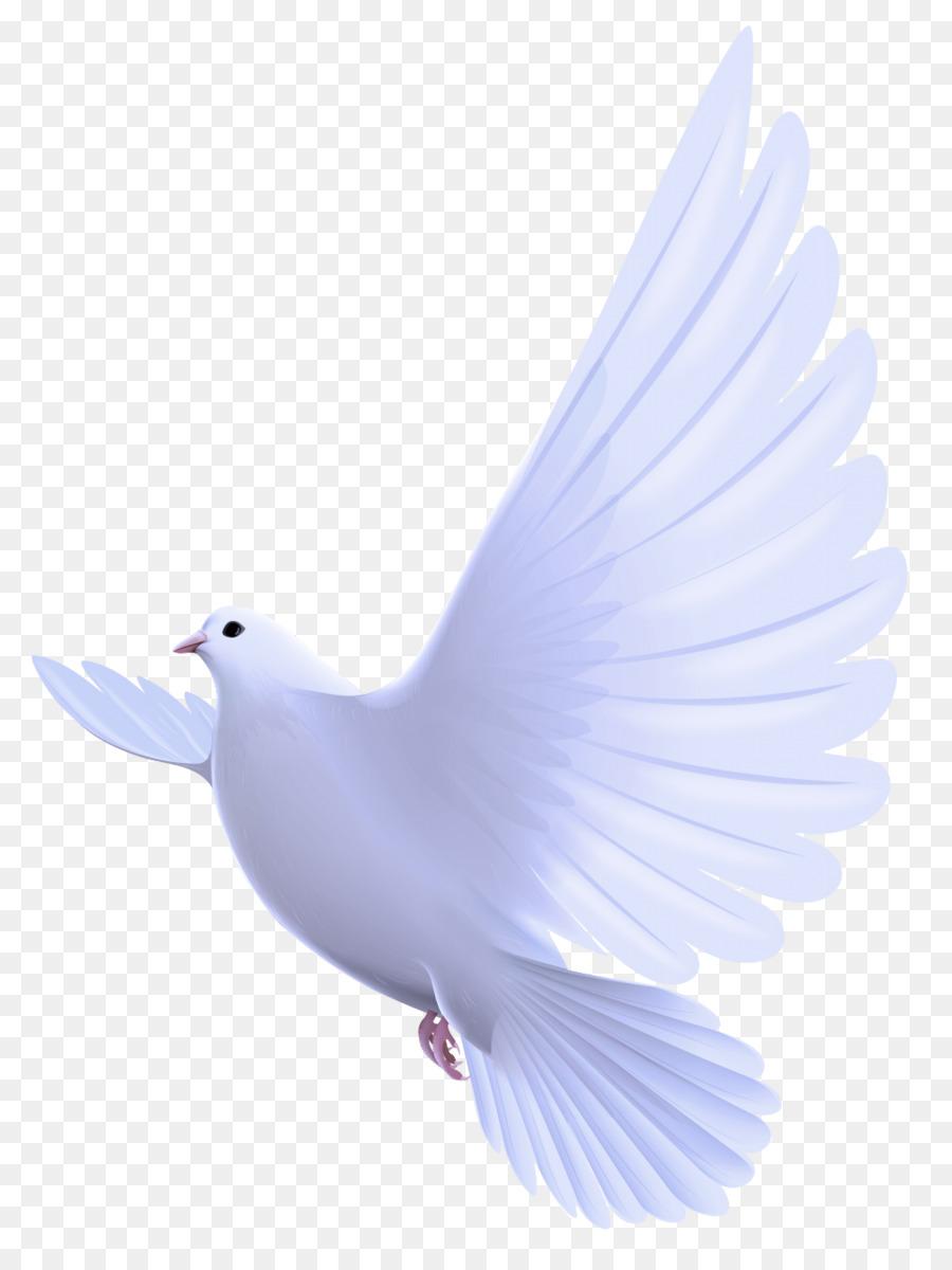 Descarga gratuita de Aves, Blanco, Las Palomas Y Las Palomas Imágen de Png