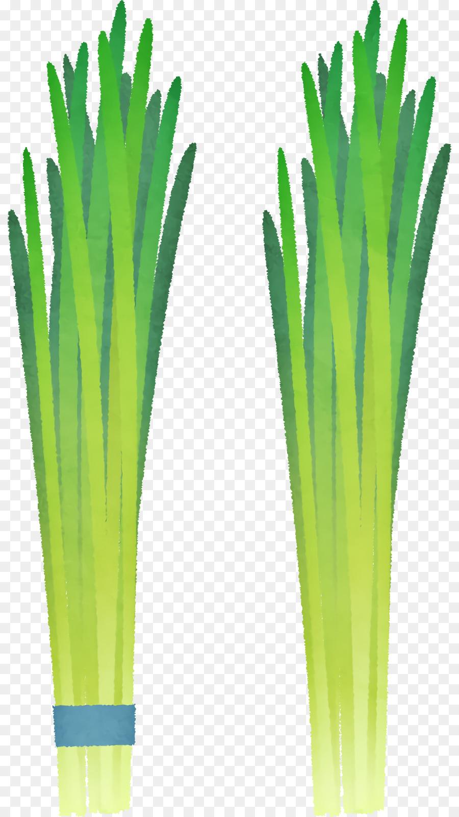 Descarga gratuita de Cebolla De Gales, De Los Productos Básicos, Hierba Imágen de Png