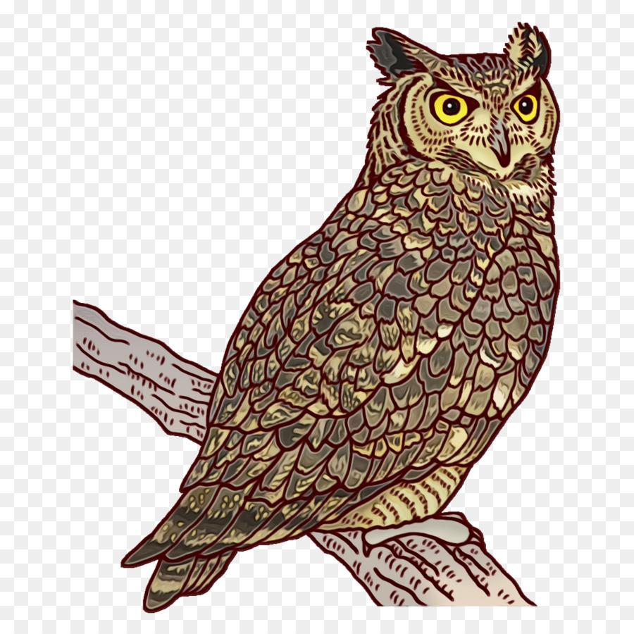 Descarga gratuita de Aves, El Pequeño Búho, Pelecaniformes Imágen de Png