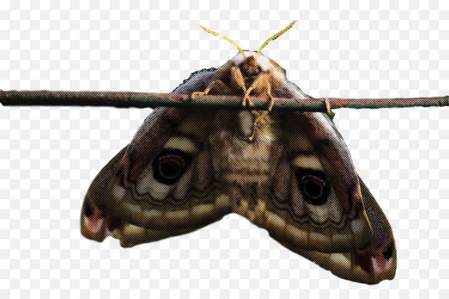 Descarga gratuita de Las Mariposas, Gusano De Seda, Caterpillar imágenes PNG