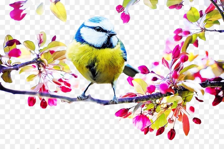 Descarga gratuita de Tit, Eurasia Blue Tit, Aves imágenes PNG
