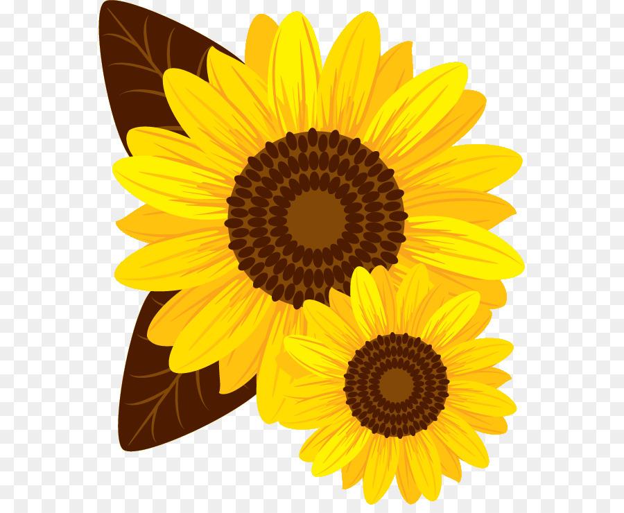 Descarga gratuita de Común De Girasol, La Semilla De Girasol, Amarillo Imágen de Png