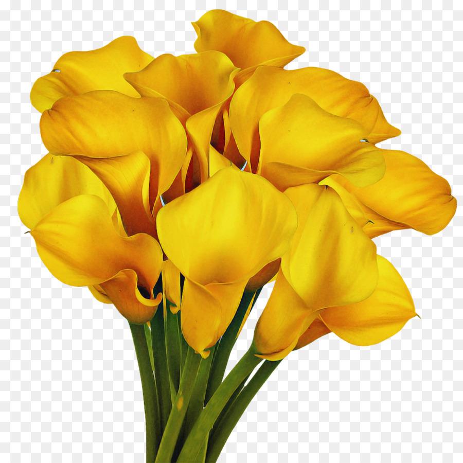 Descarga gratuita de Canna, Las Flores Cortadas, Flor Imágen de Png