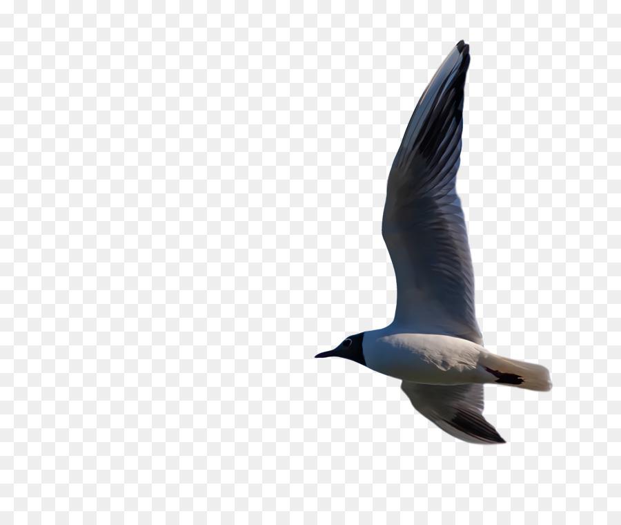 Descarga gratuita de Los Pingüinos, Gaviota, De Aves Marinas Imágen de Png