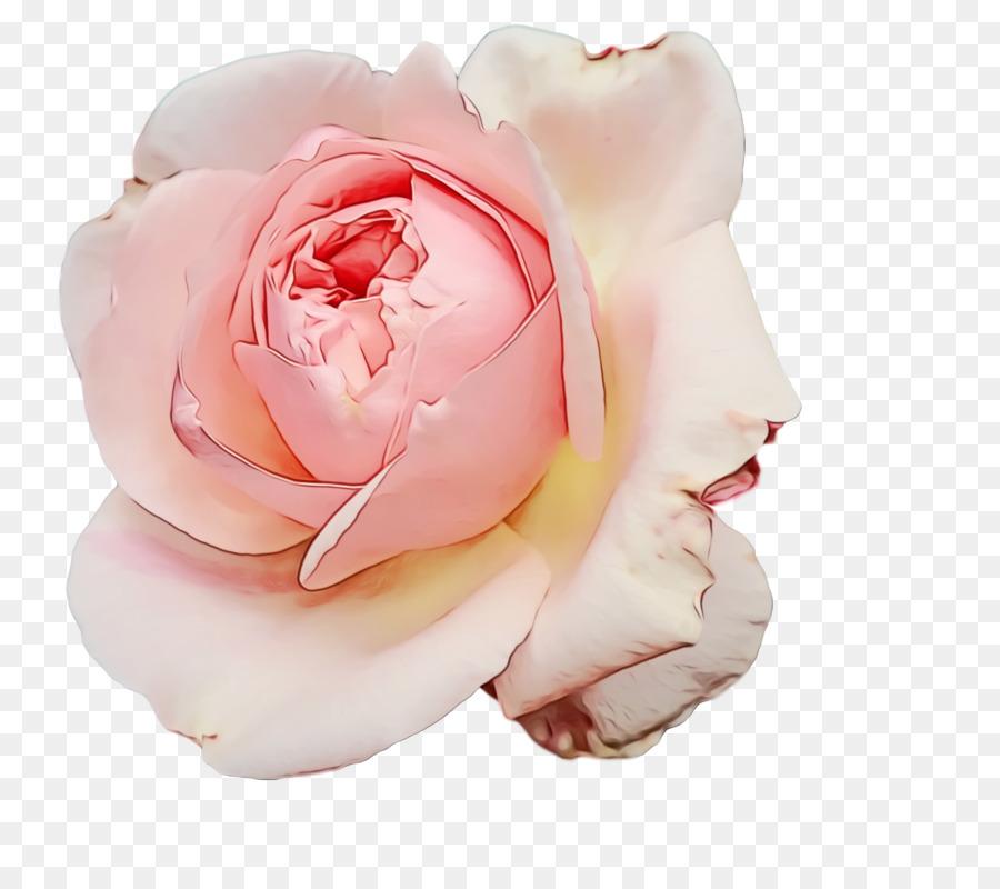 Descarga gratuita de Las Rosas De Jardín, Col Rosa, Las Flores Cortadas Imágen de Png