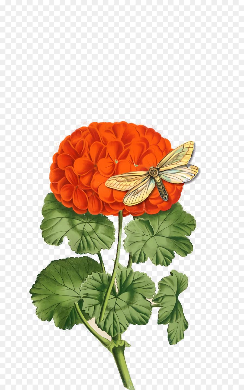 Descarga gratuita de Las Flores Cortadas, Planta Anual, Pétalo Imágen de Png